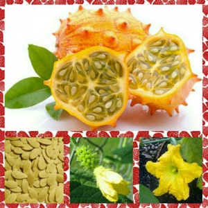 kiwano jelly melon seeds
