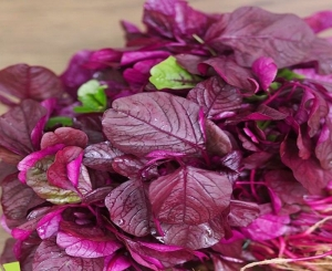 red edible amaranth chinese spinach seeds