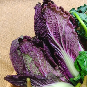 red f1 chinese cabbage seeds