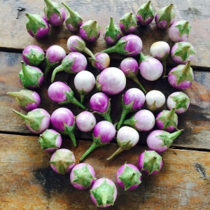 round mini purple african eggplant seeds