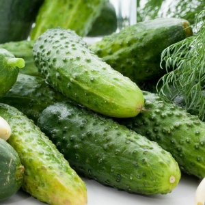 smr58 pickling cucumber seeds