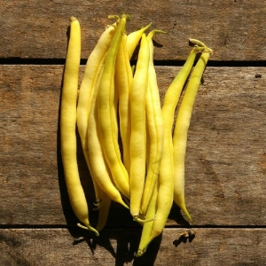 yellow cherokee bush bean seeds